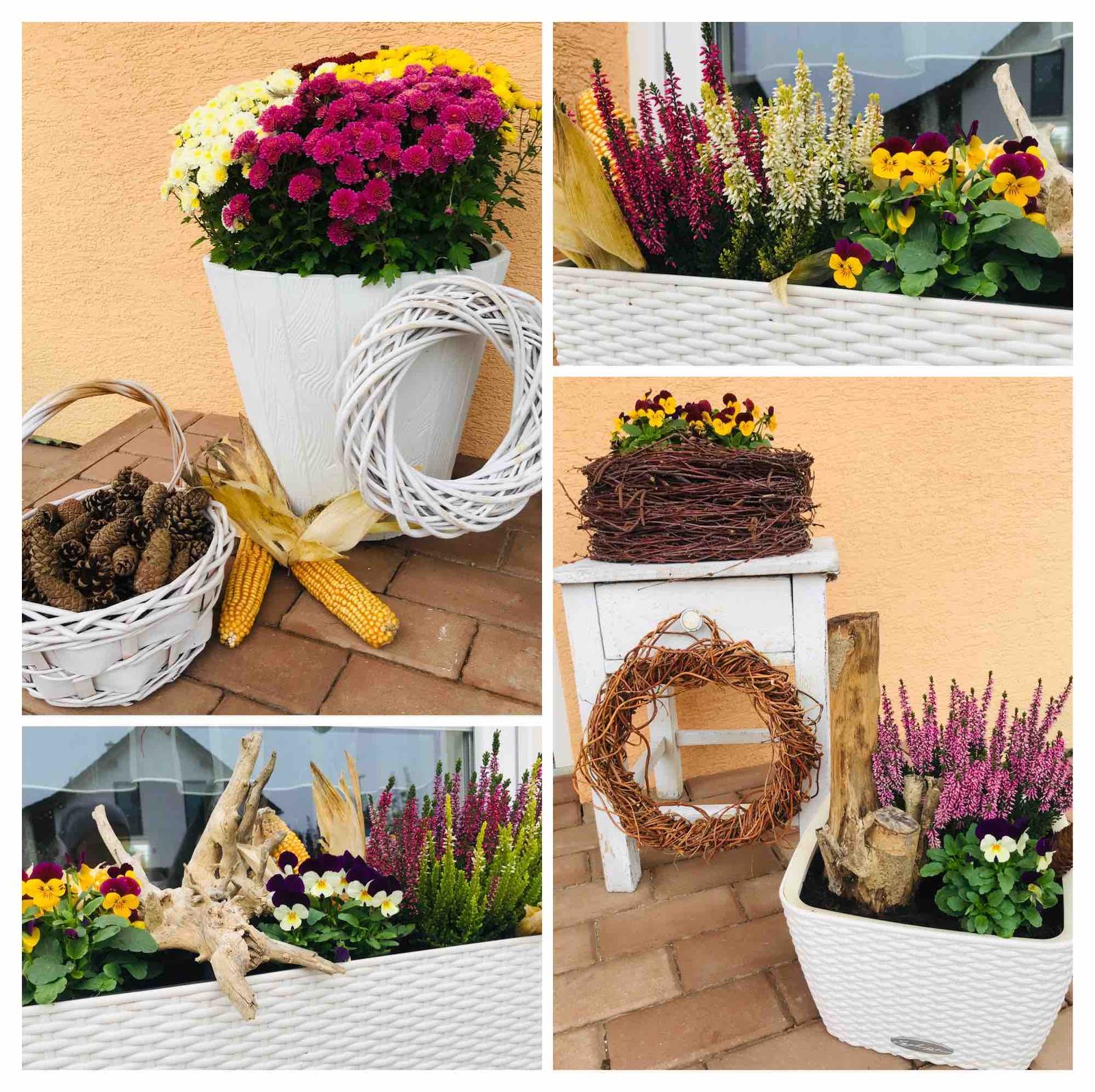 Naše barevná zahrada 🌸 - Macešky krásně kvetou, chryza otevřela poupata, doplněno jen kukuřicÍ a šiškami 🤗