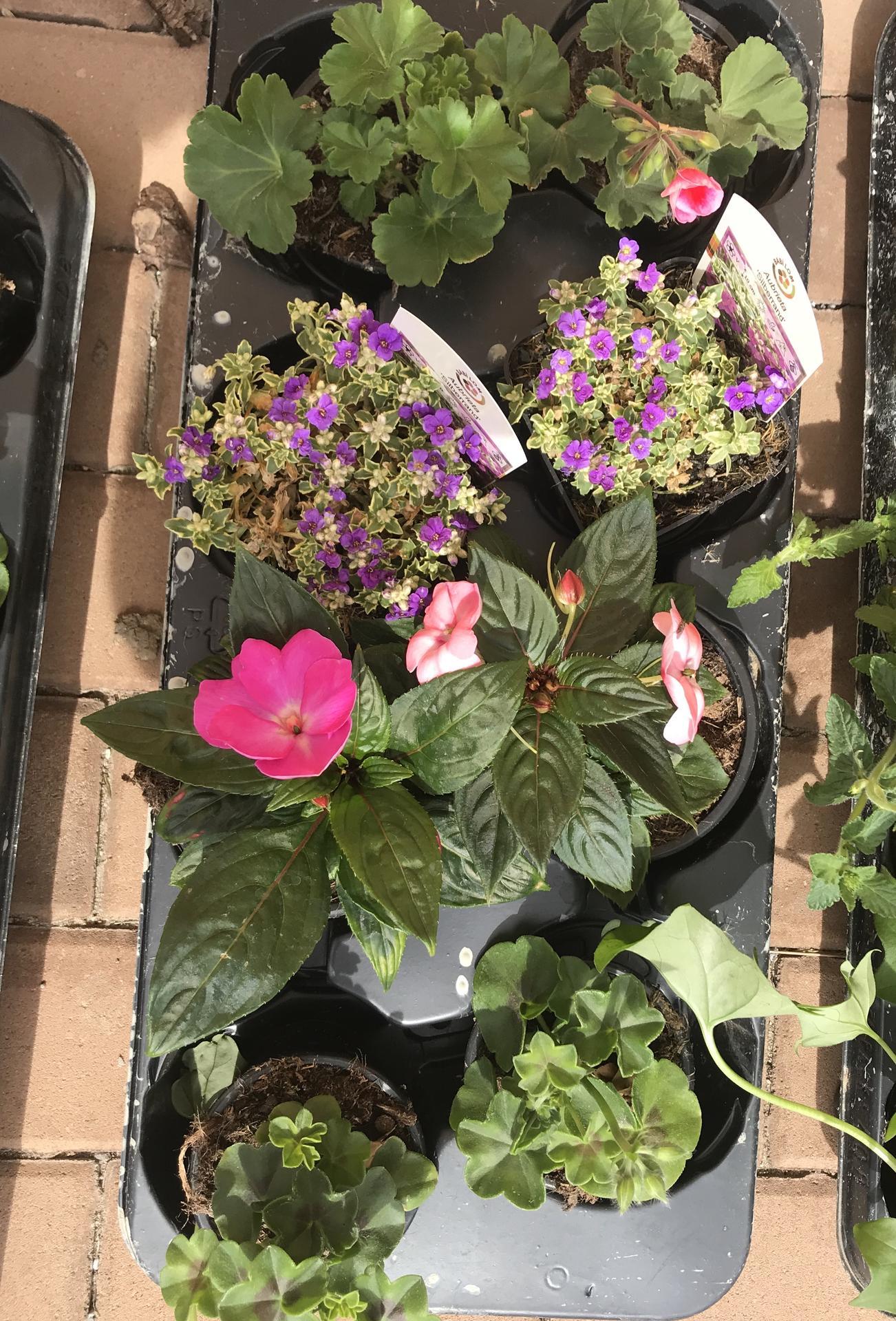 Naše barevná zahrada 🌸 - Tařičky tedy půjdou do země