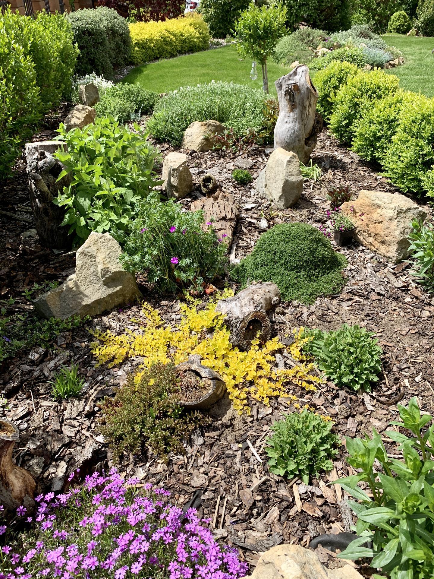 Naše barevná zahrada 🌸 - Zahradní zvonky, mateřídouška, iberka, koniklec, šalvěj, phloxy a mnoho dalších 🌸
