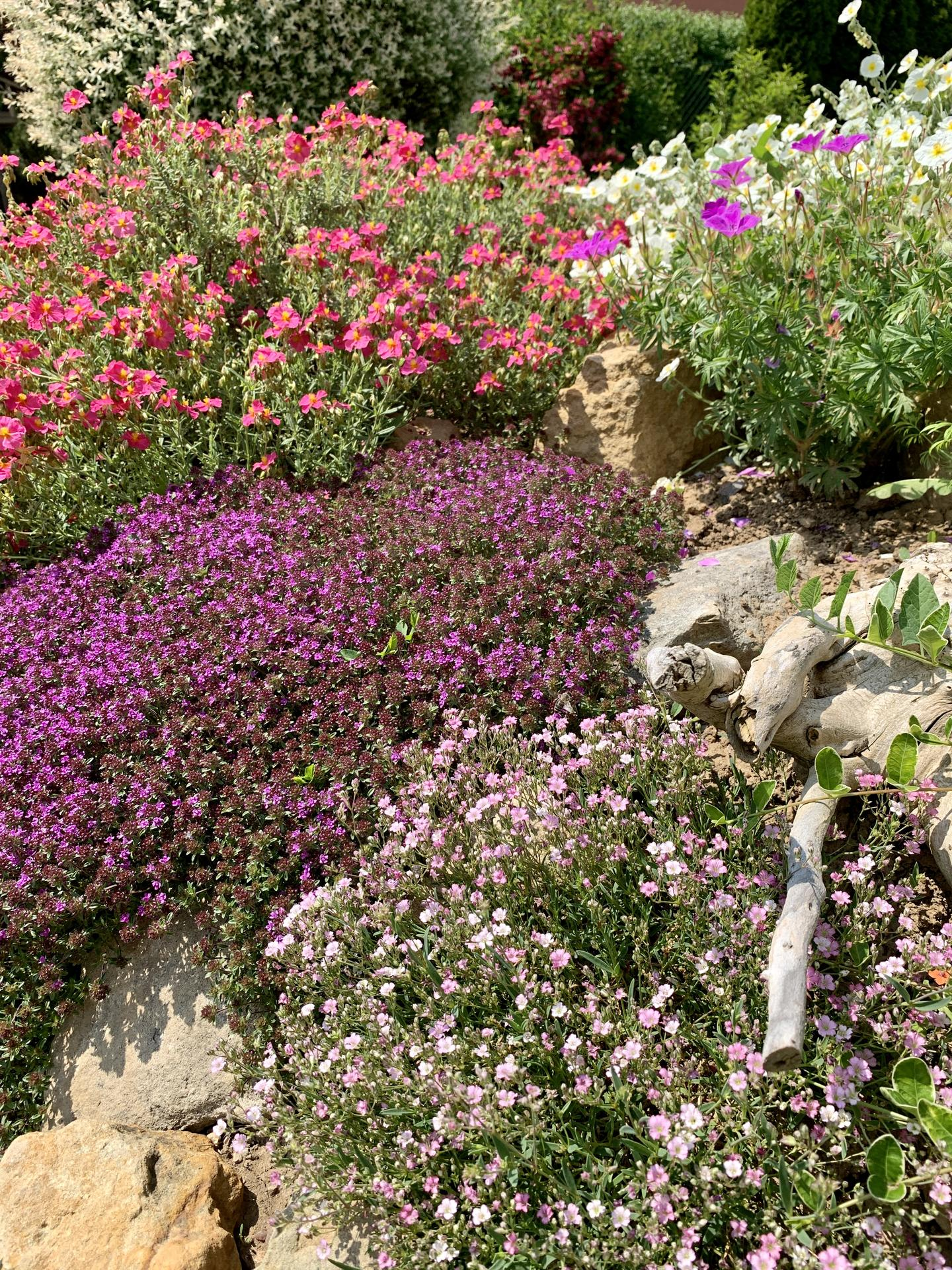 Naše barevná zahrada 🌸 - Na skalce už nejsou vidět ani kameny, vše krásně zarostlo 🌸