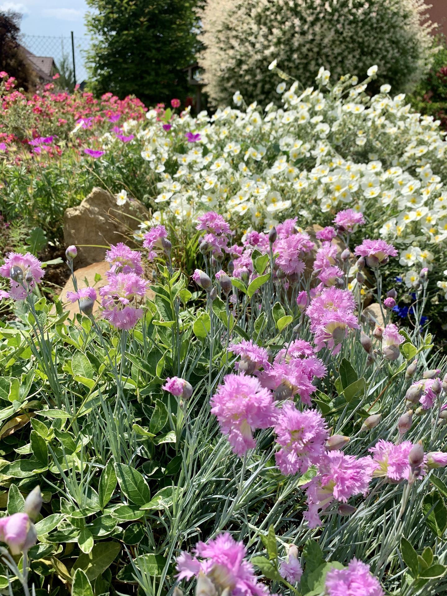 Naše barevná zahrada 🌸 - Další část skalky 🤗