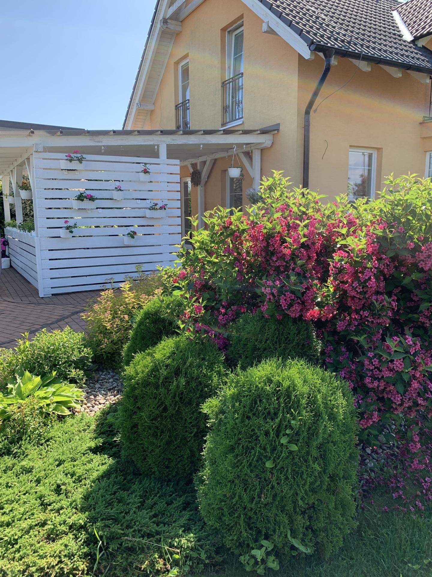 Naše barevná zahrada 🌸 - Z druhé strany visí muškáty 🤗