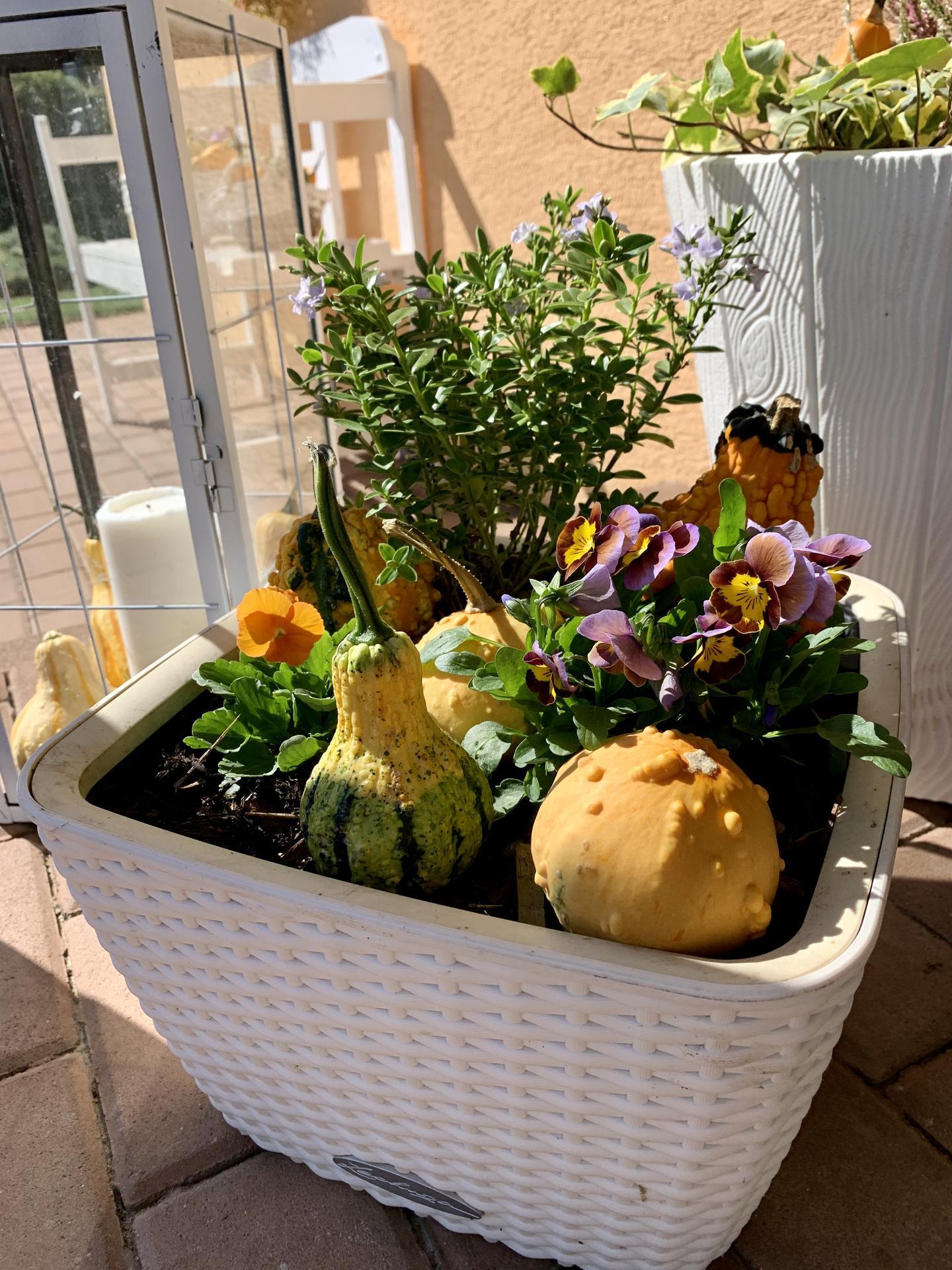 Naše barevná zahrada 🌸 - Před vchodem už podzimní výzdoba 🤗