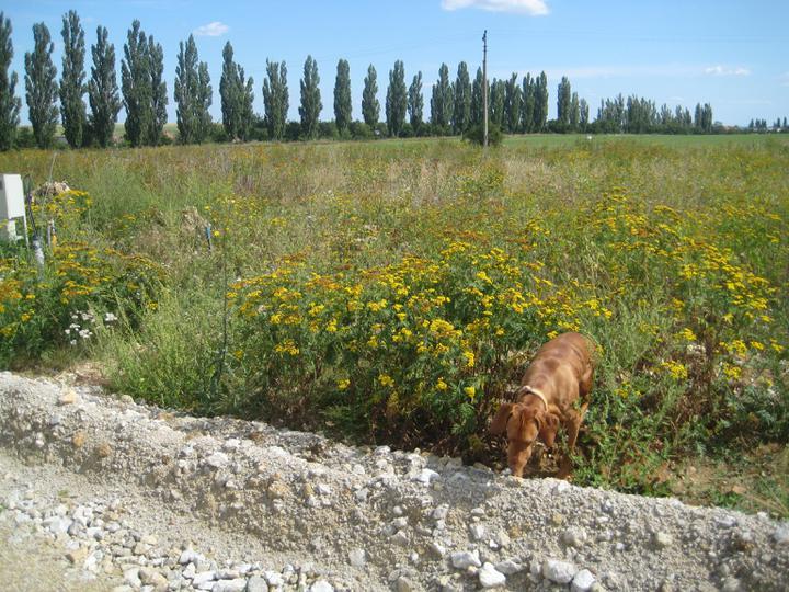 Pozemok - Zatial este zarasteny pozemok a v pozadi topolova alej k pozemku:)