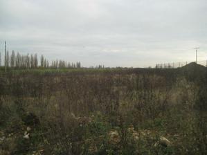 jesen na pozemku