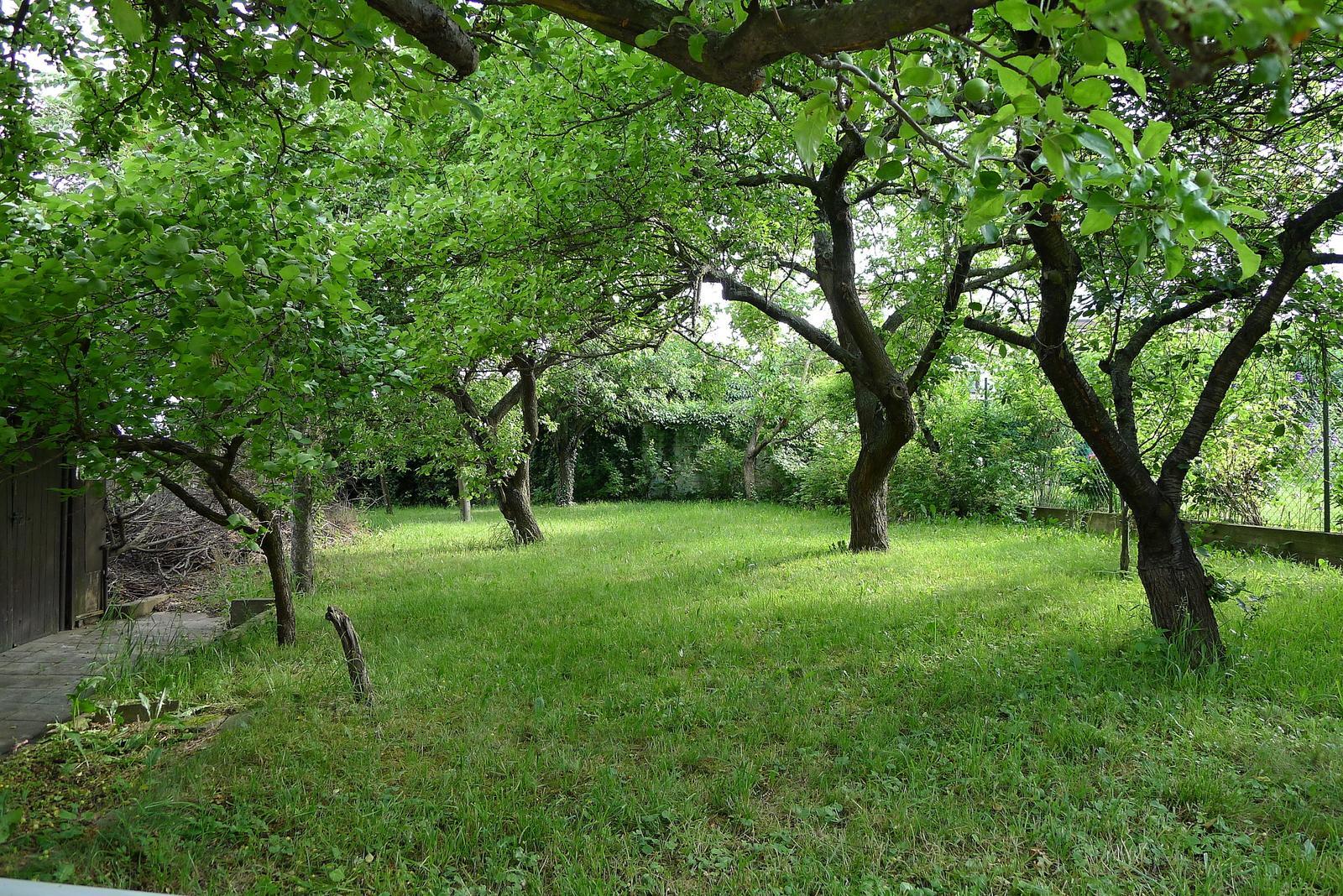 Rekonstrukce našeho domečku - pohled do zahrady....budeme ji muset prořezat, aby k nám mohlo sluníčko :o)
