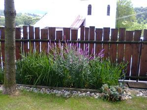 koncová zóna s výtokovou šachtou, vrbica v plnom kvete