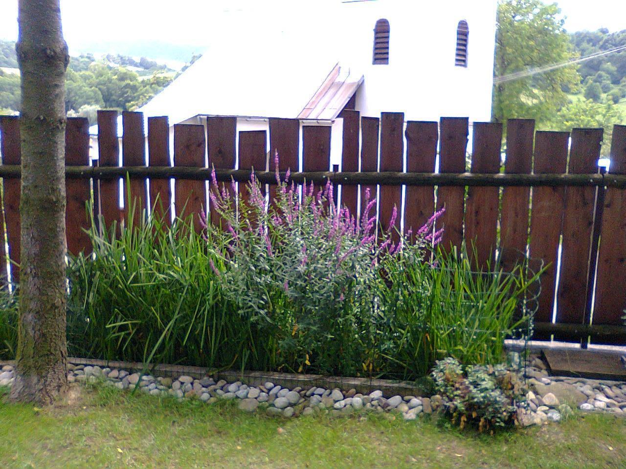 Koreňová čistička pre rodinný dom - koncová zóna s výtokovou šachtou, vrbica v plnom kvete