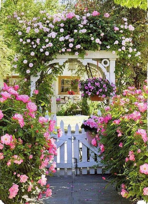 Krása divokej záhrady - Obrázok č. 69