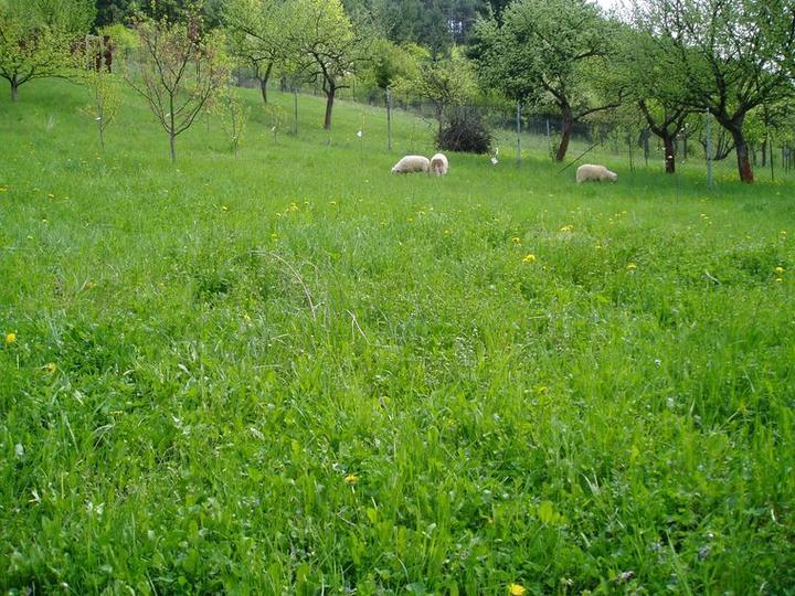 Súčasť domu-záhrada alebo, zelená je dobrá... - Obrázok č. 9
