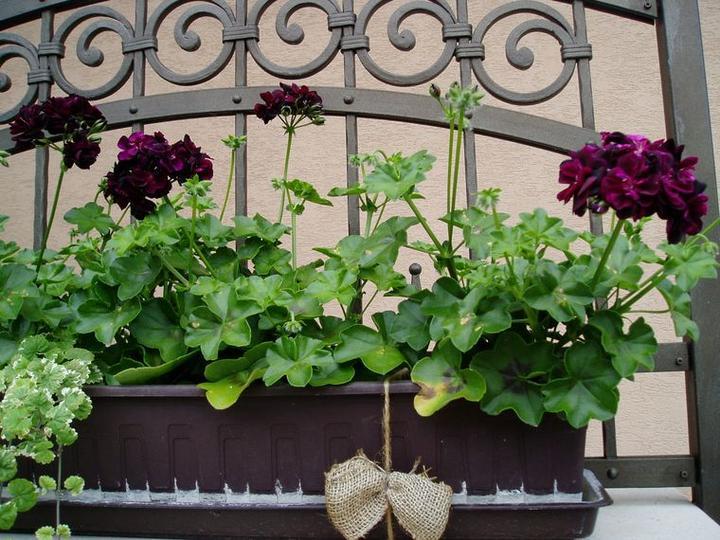 Súčasť domu-záhrada alebo, zelená je dobrá... - Obrázok č. 10