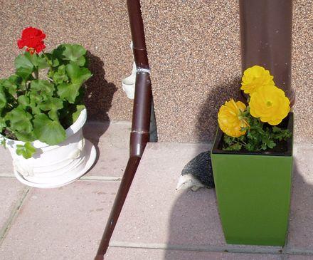Súčasť domu-záhrada alebo, zelená je dobrá... - Obrázok č. 11