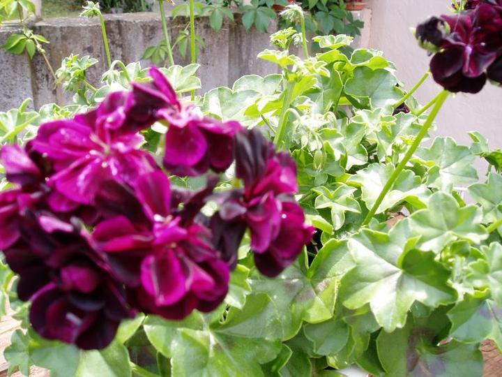 Súčasť domu-záhrada alebo, zelená je dobrá... - Obrázok č. 6
