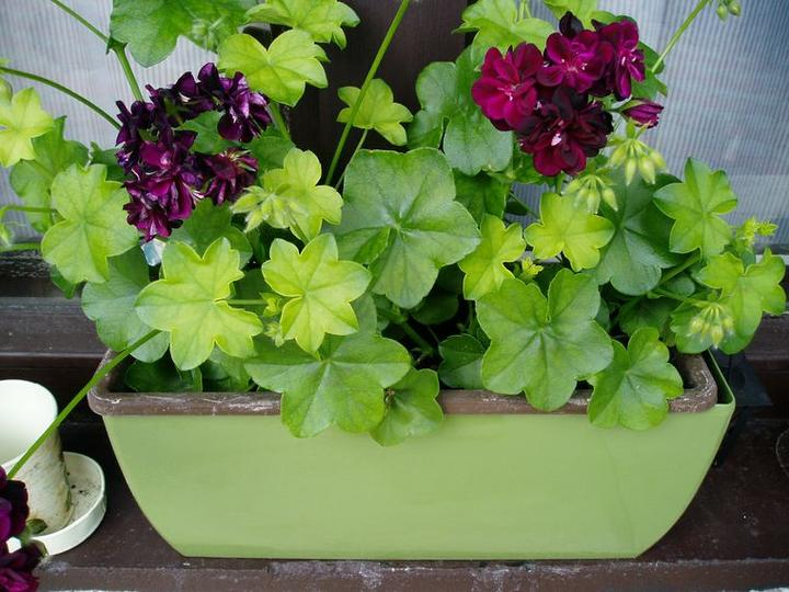 Súčasť domu-záhrada alebo, zelená je dobrá... - Obrázok č. 12