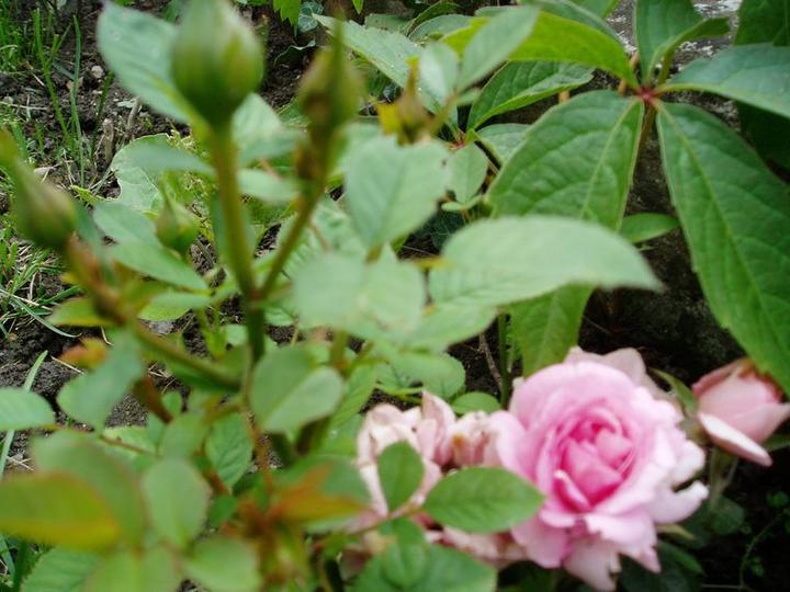 Súčasť domu-záhrada alebo, zelená je dobrá... - Obrázok č. 18