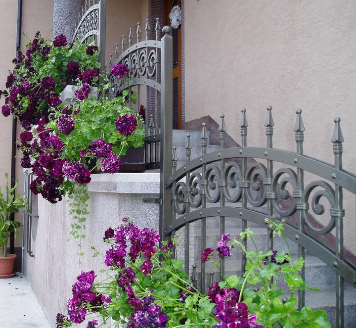 Súčasť domu-záhrada alebo, zelená je dobrá... - Obrázok č. 31