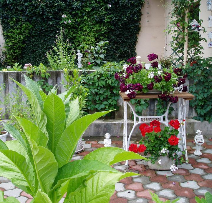 Súčasť domu-záhrada alebo, zelená je dobrá... - Obrázok č. 26