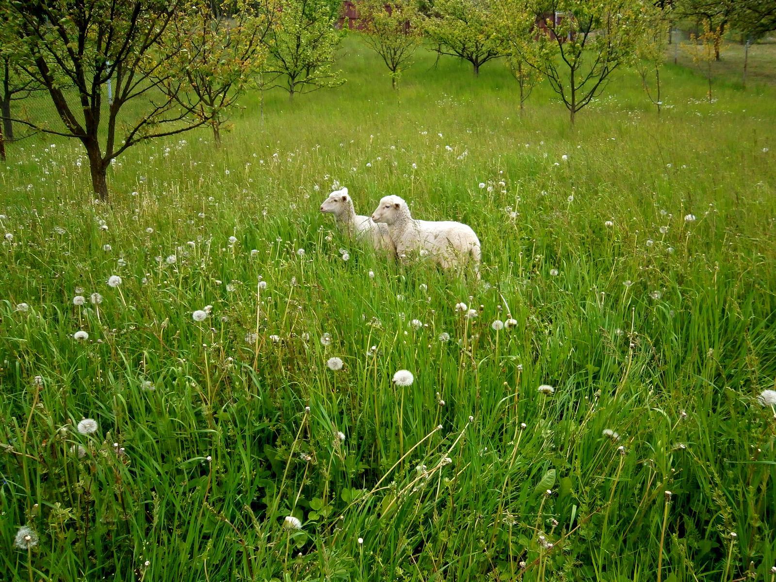 Súčasť domu-záhrada alebo, zelená je dobrá... - Obrázok č. 46