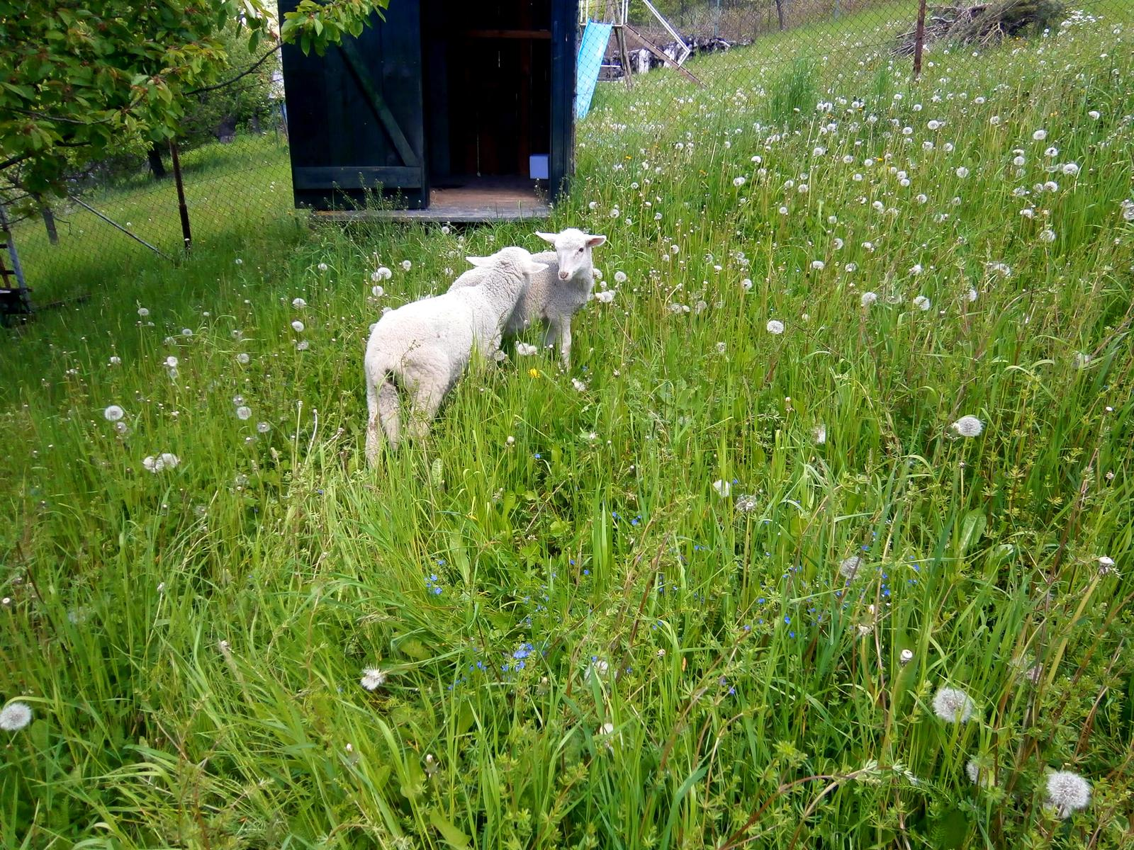 Súčasť domu-záhrada alebo, zelená je dobrá... - Obrázok č. 47