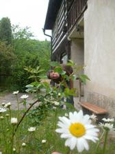 kopretinky kvetou !!!