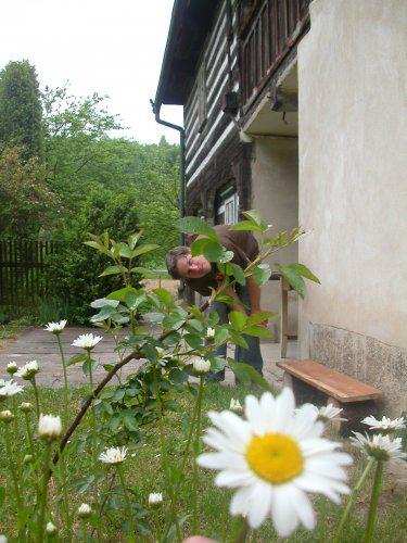 *Naše chaloupka* - kopretinky kvetou !!!