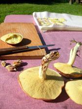 houby rostou přímo na zahradě:)