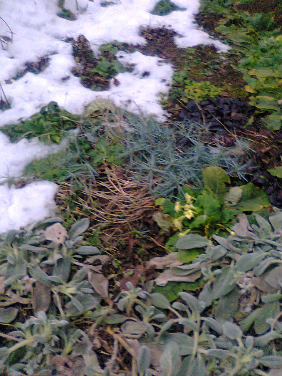 """Naša """"oddychovka"""" - moja záhradka"""
