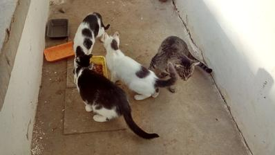 Veľké prsia mačička videá