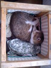 Cico-babičkin kocúr na jeho obľúbenom miestečku - kôš so špinavým prádlom