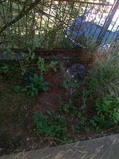Jerynkove obľúbené miesto v záhradke