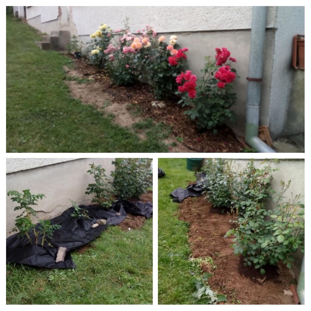 """Naša """"oddychovka"""" - Ruže budú mať obrubníky zelené drevené"""