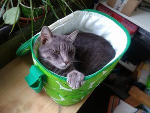 Veľký horúci mačička