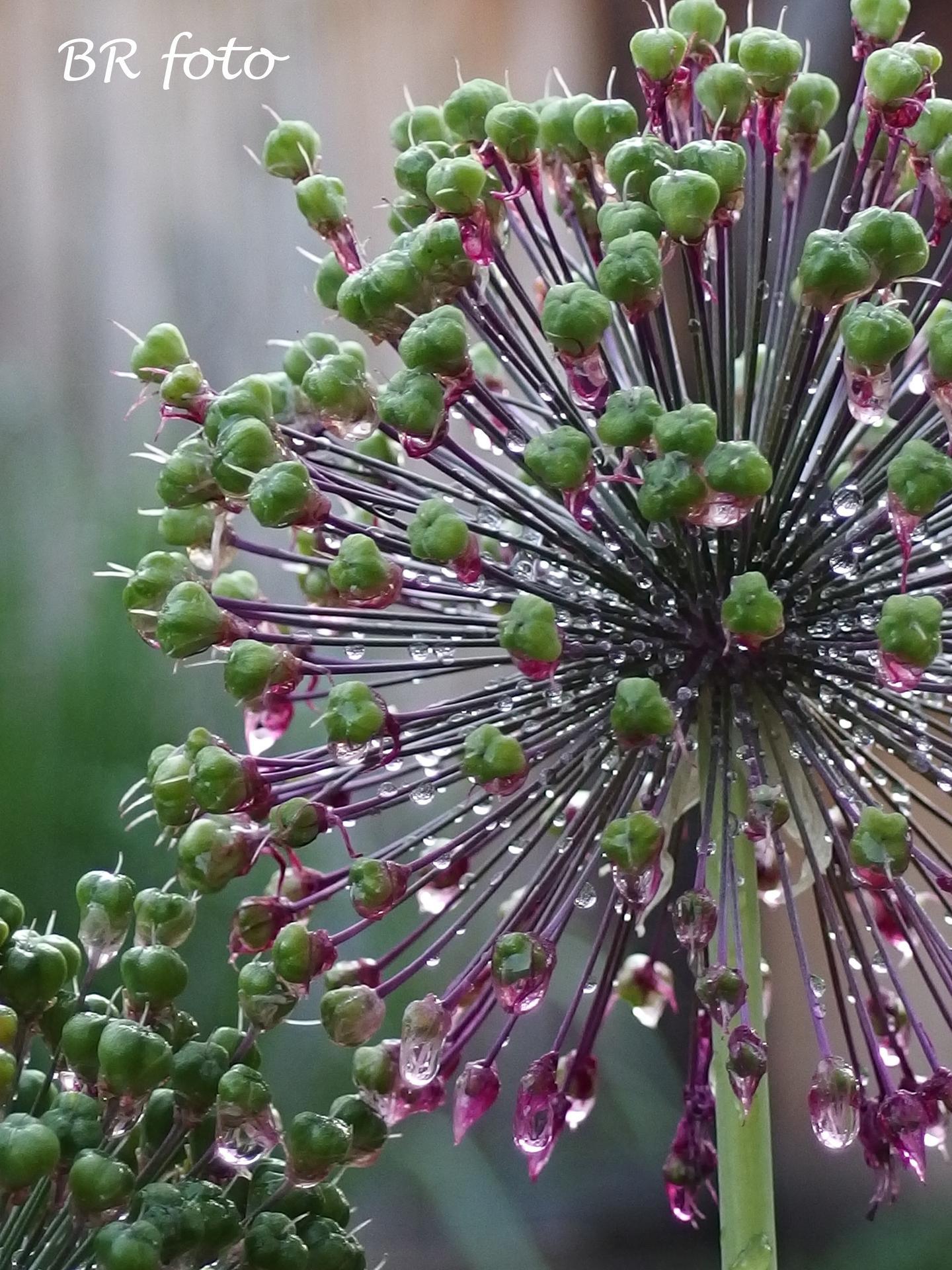 Zahrada v červnu - vše roste a kvete jako o život.... - Obrázek č. 3