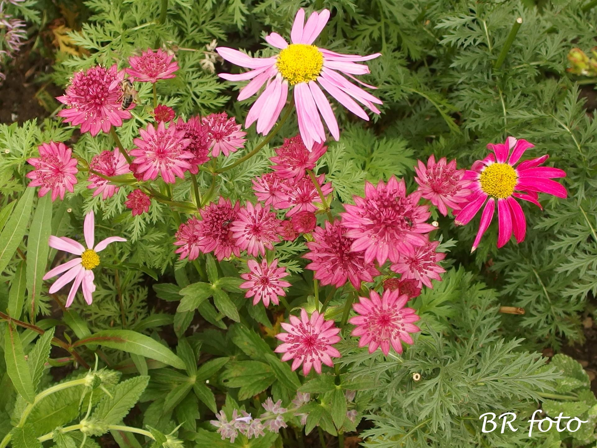 Zahrada v červnu - vše roste a kvete jako o život.... - jarmanka