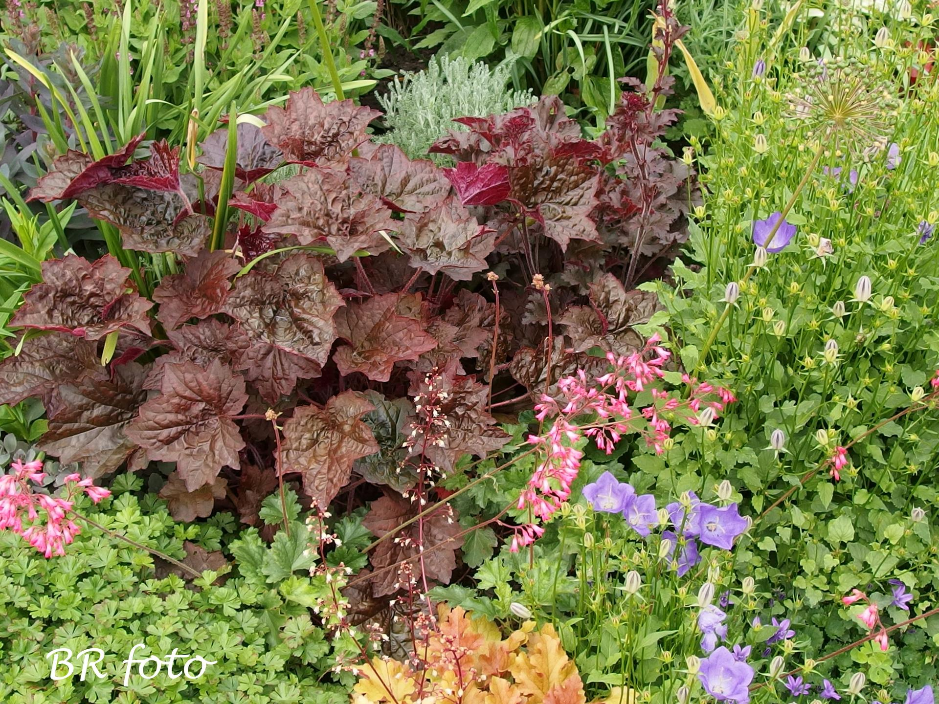 Zahrada v červnu - vše roste a kvete jako o život.... - dlužicha