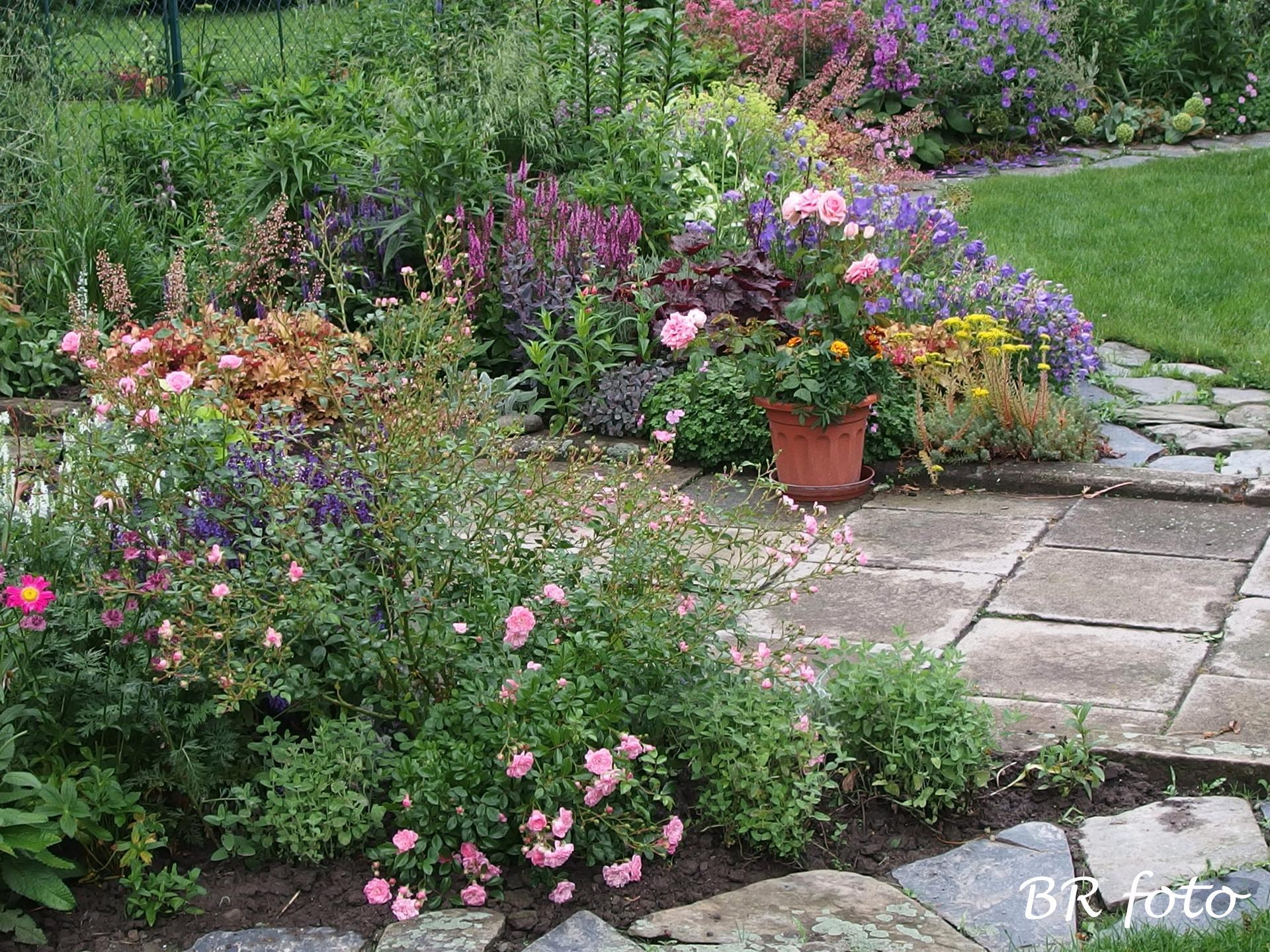 Zahrada v červnu - vše roste a kvete jako o život.... - předzahrádka
