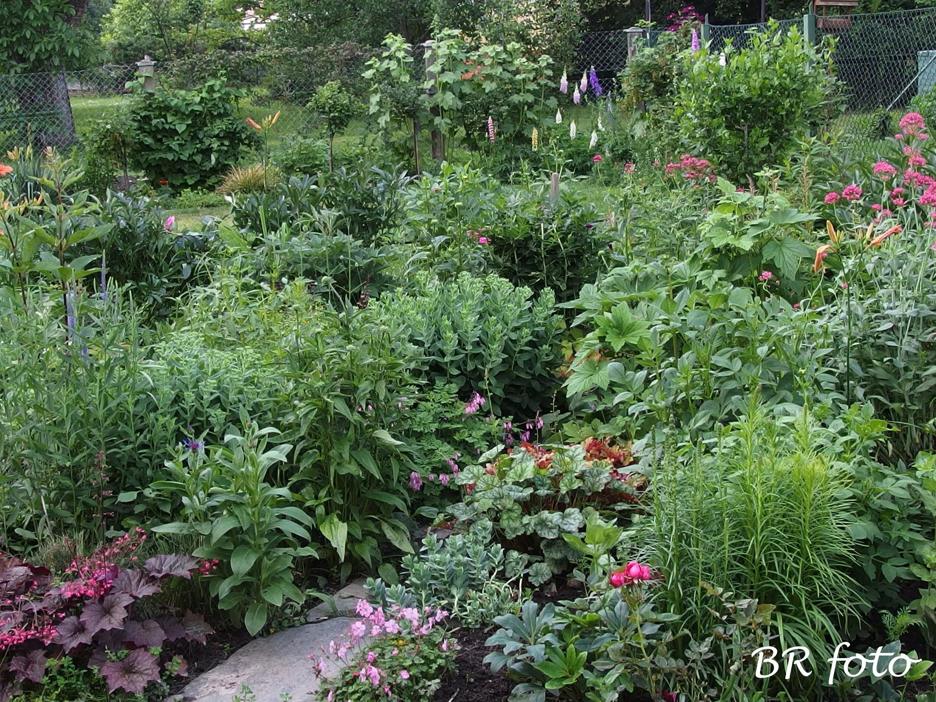 """Zahrada v červnu - vše roste a kvete jako o život.... - """"zazahrádka"""" - trvalky kvetoucí zjara ostříhané, mavuň zredukovaná, ostříhané odkvetlé květy"""