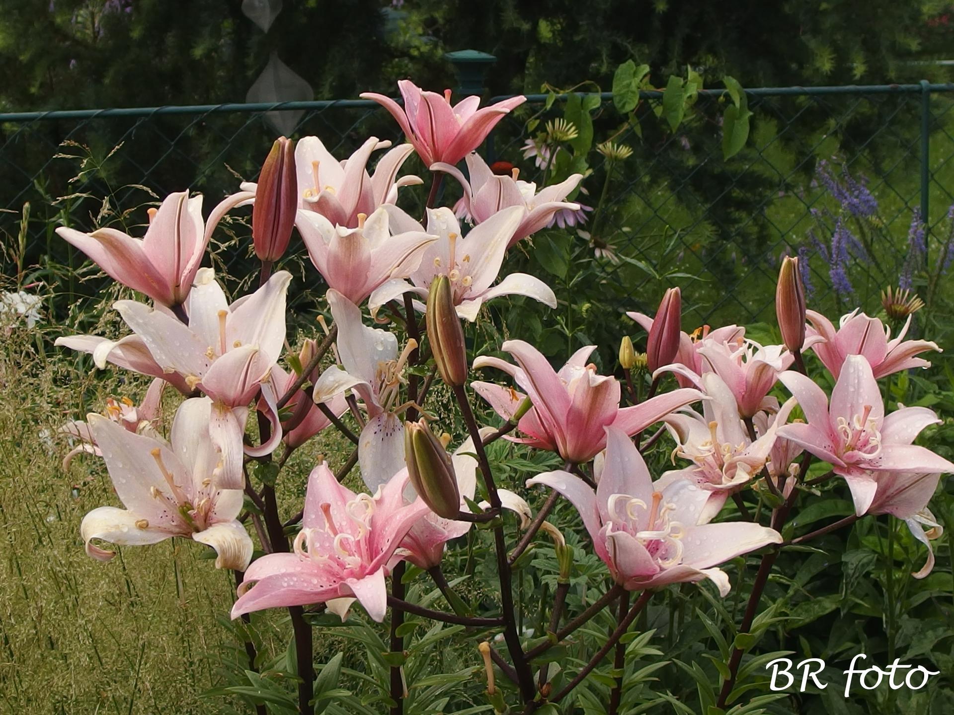 Zahrada v létě
