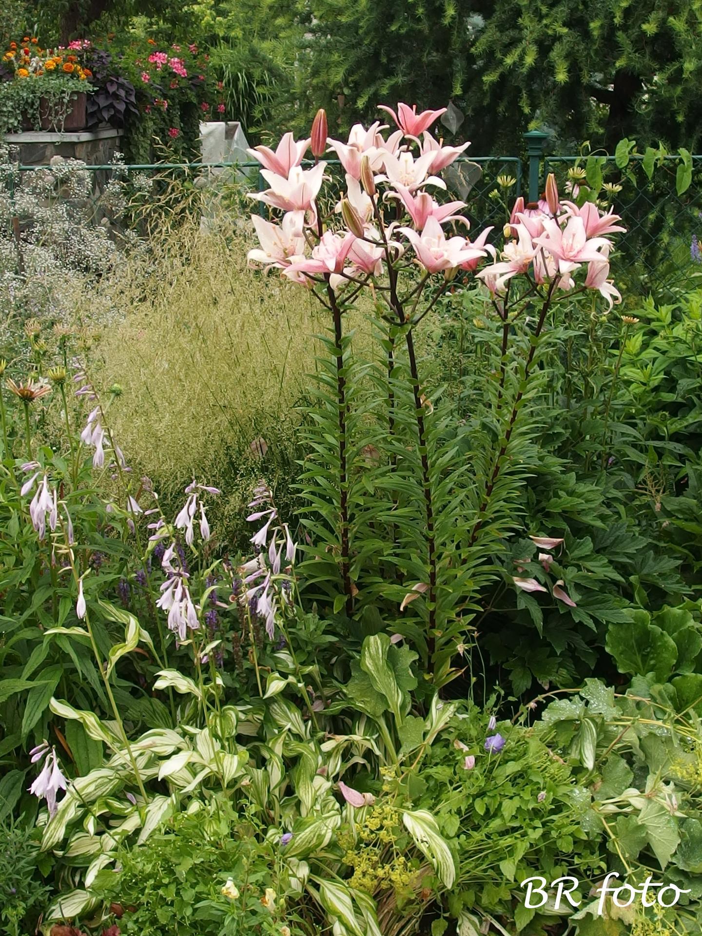 Zahrada v létě - Obrázek č. 2