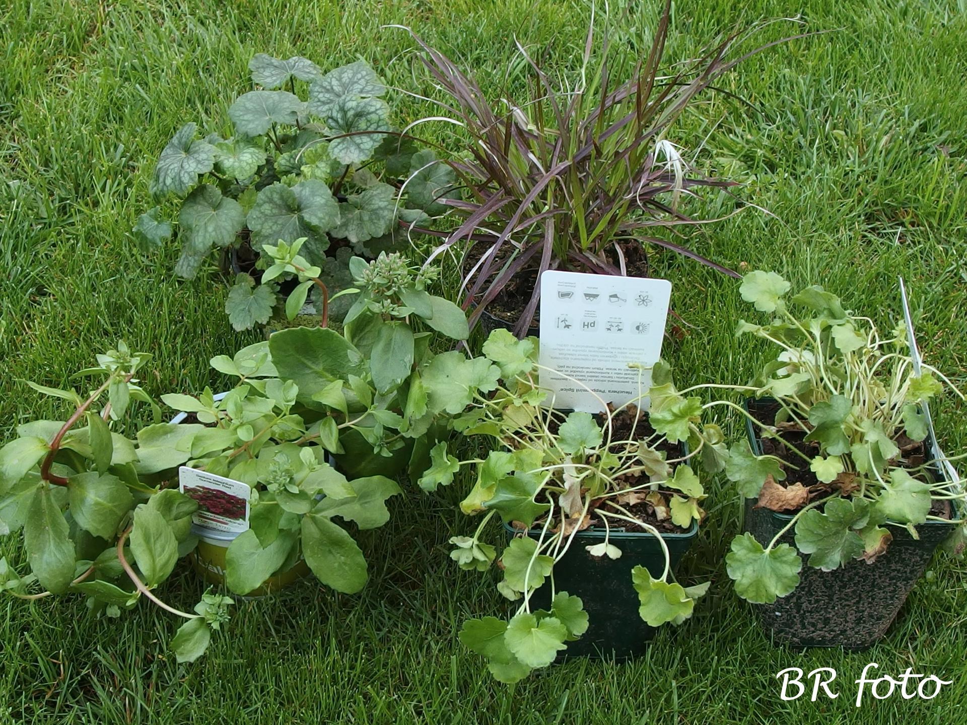 Zahrada v létě - výprodej Hornbach, vyčouhlé a smutné rostliny, bylo mi jich líto....