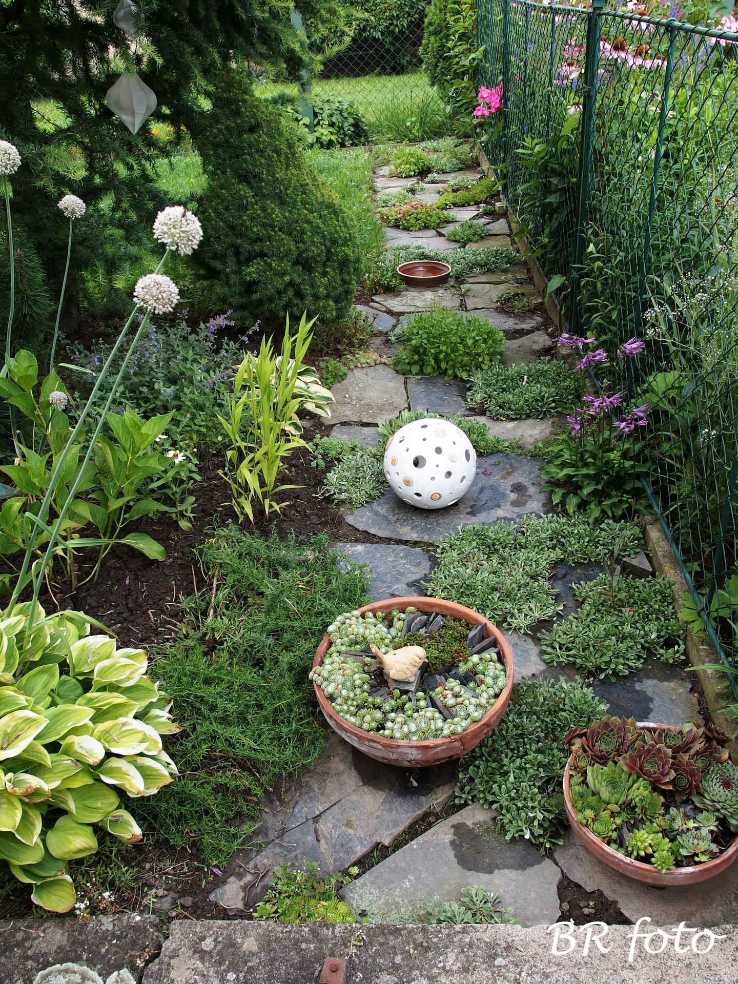 Zahrada v létě - vyplela jsem chodníček
