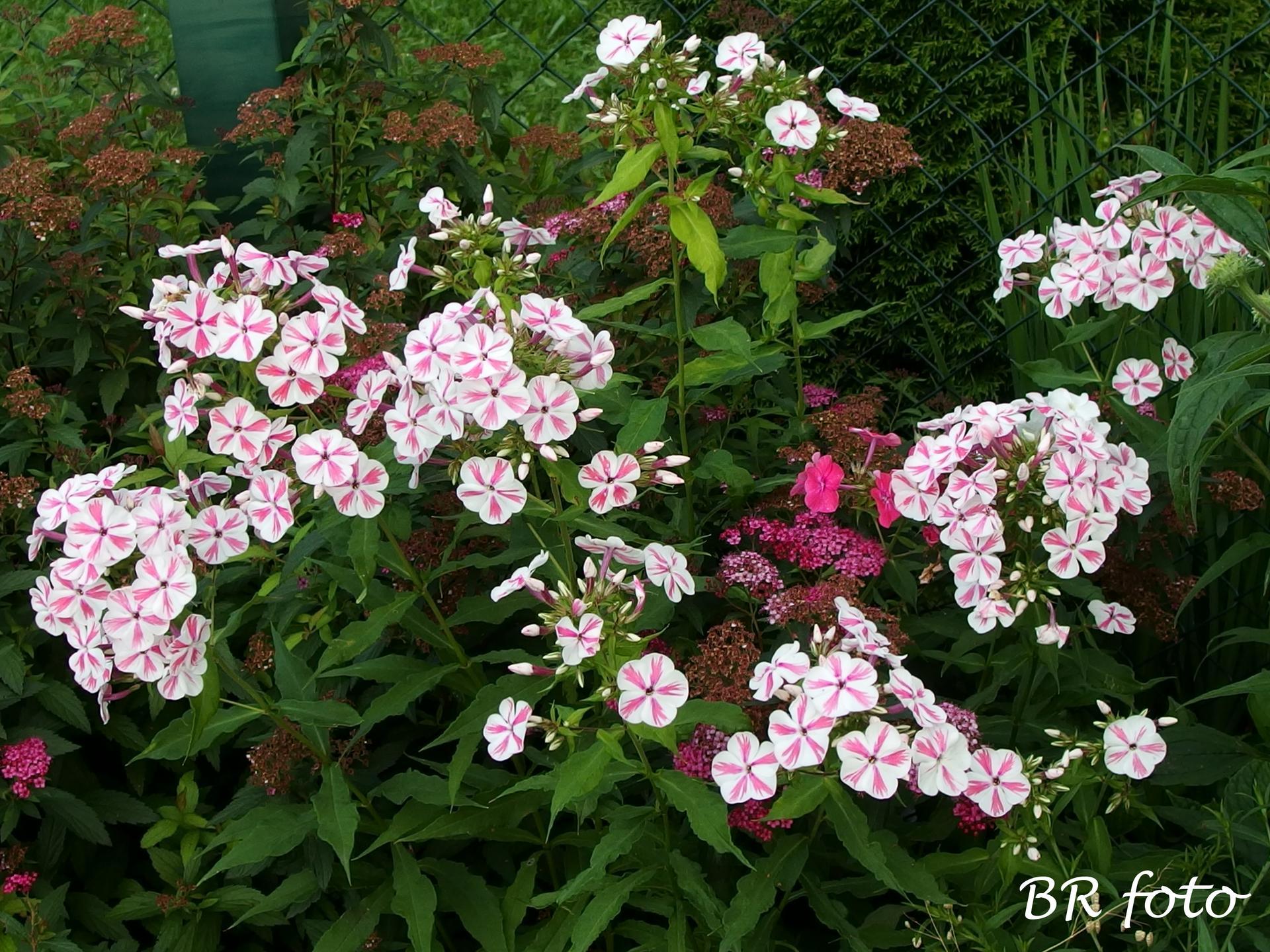 Zahrada v létě - Obrázek č. 45
