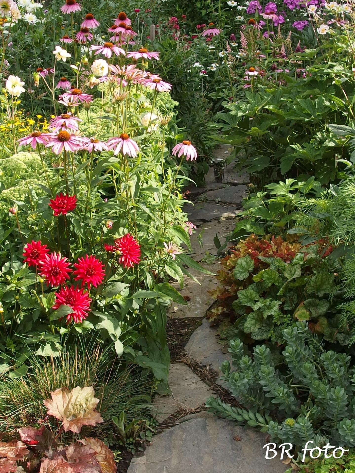 Zahrada v létě - Obrázek č. 41