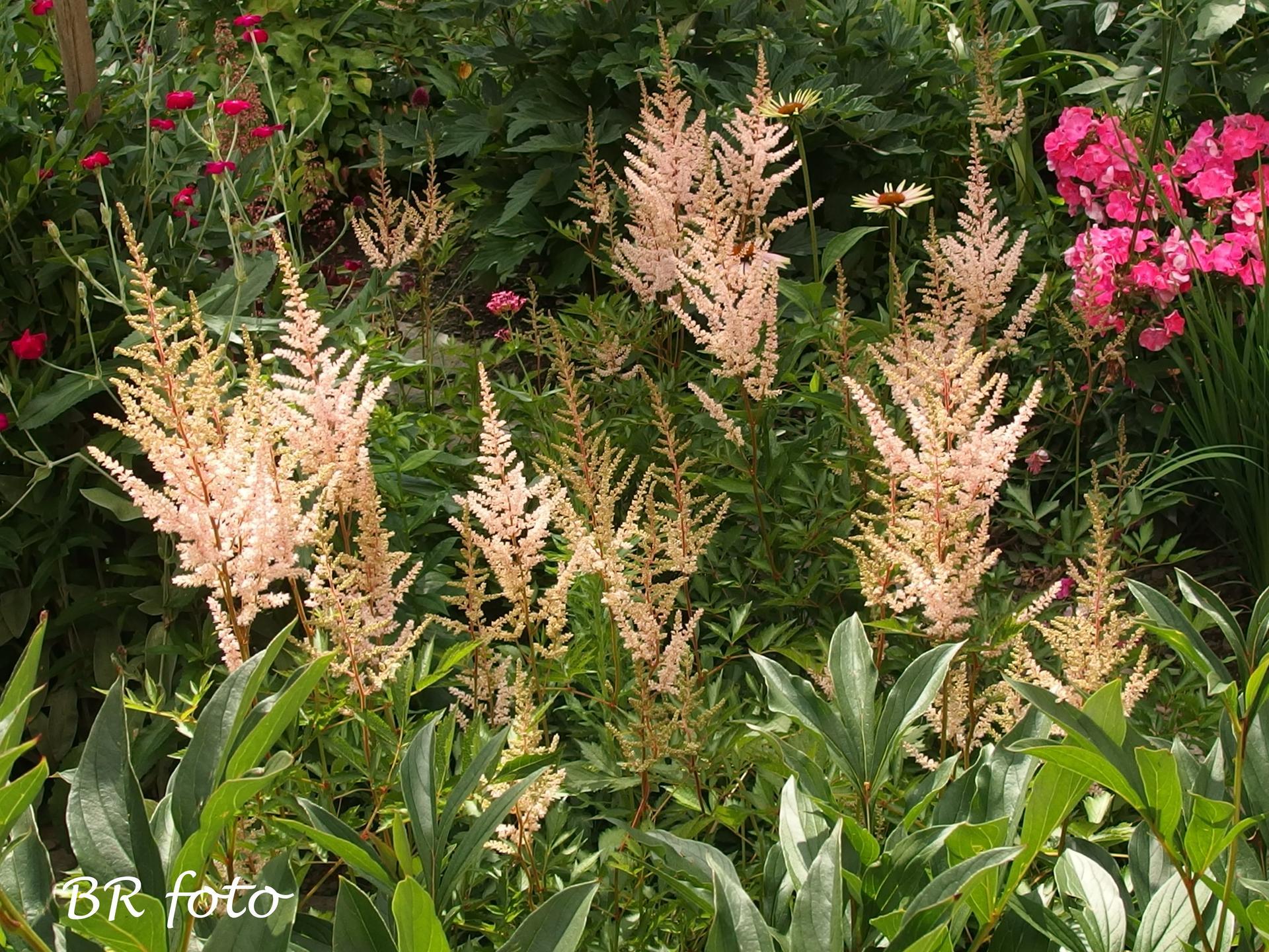 Zahrada v létě - čechrava