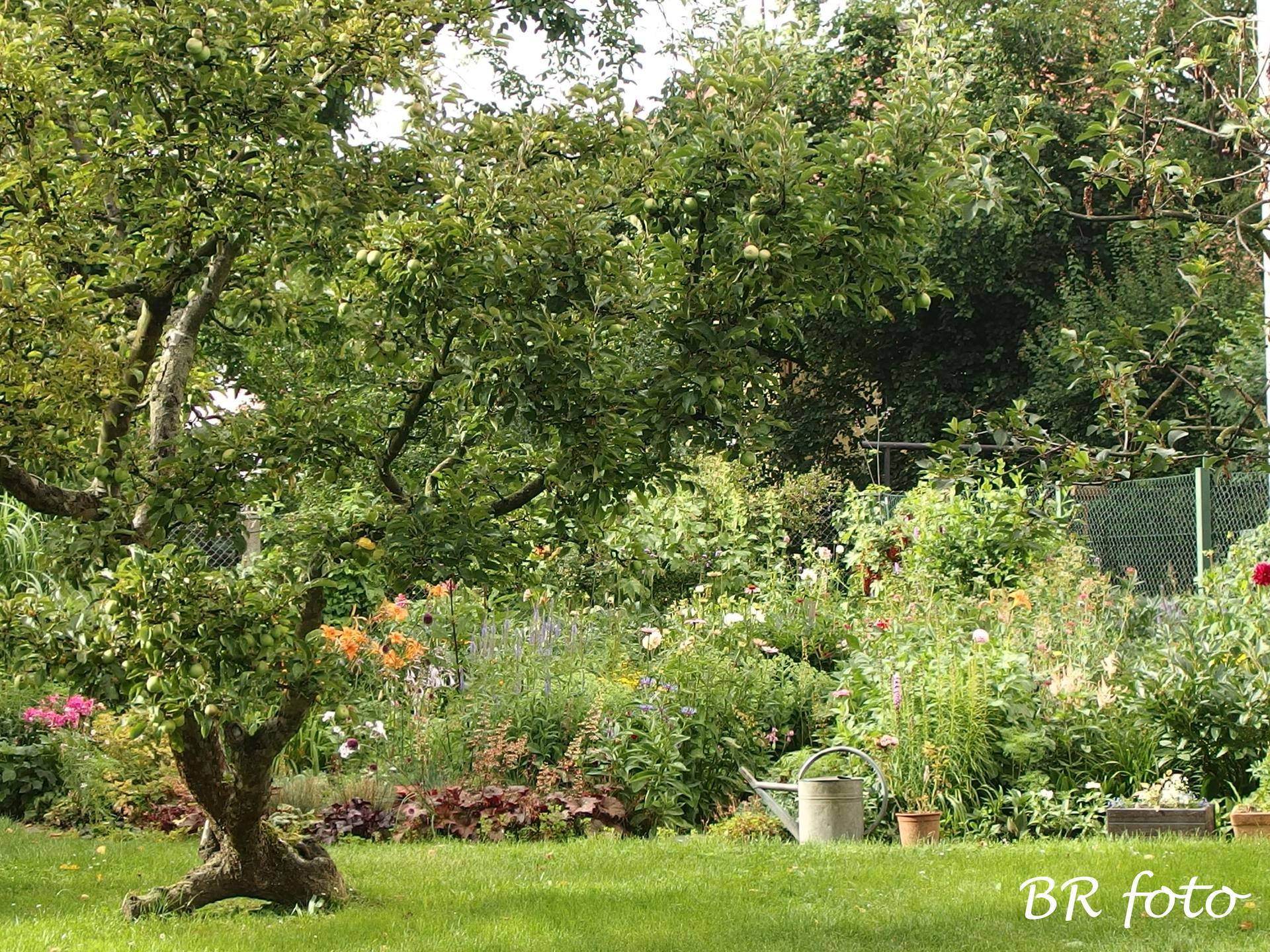 Zahrada v létě - záhony za domem