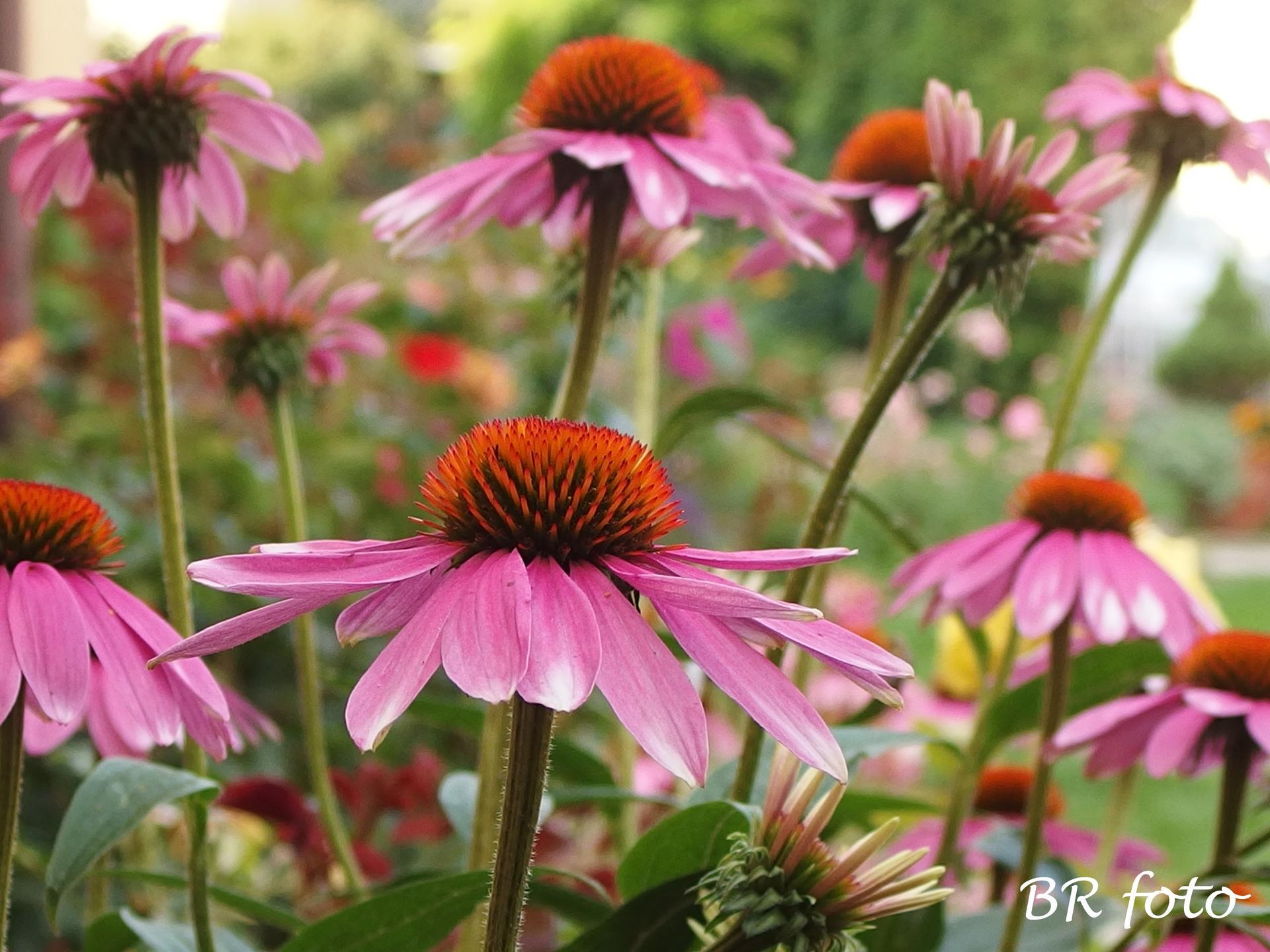Zahrada v létě - Obrázek č. 62