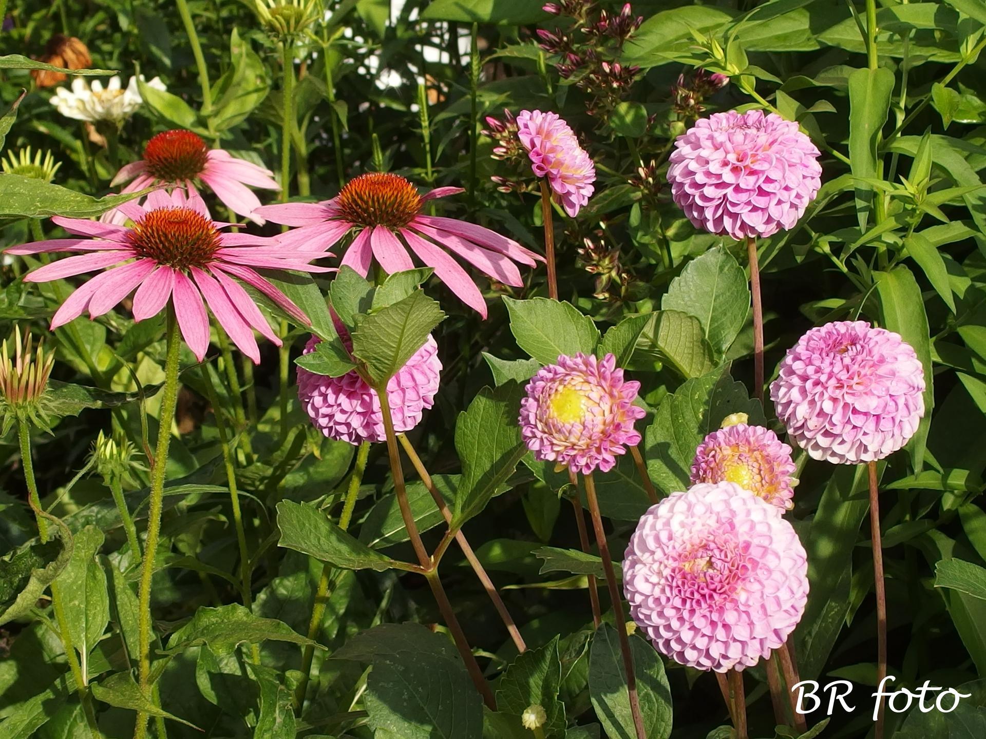 Zahrada v létě - Obrázek č. 55