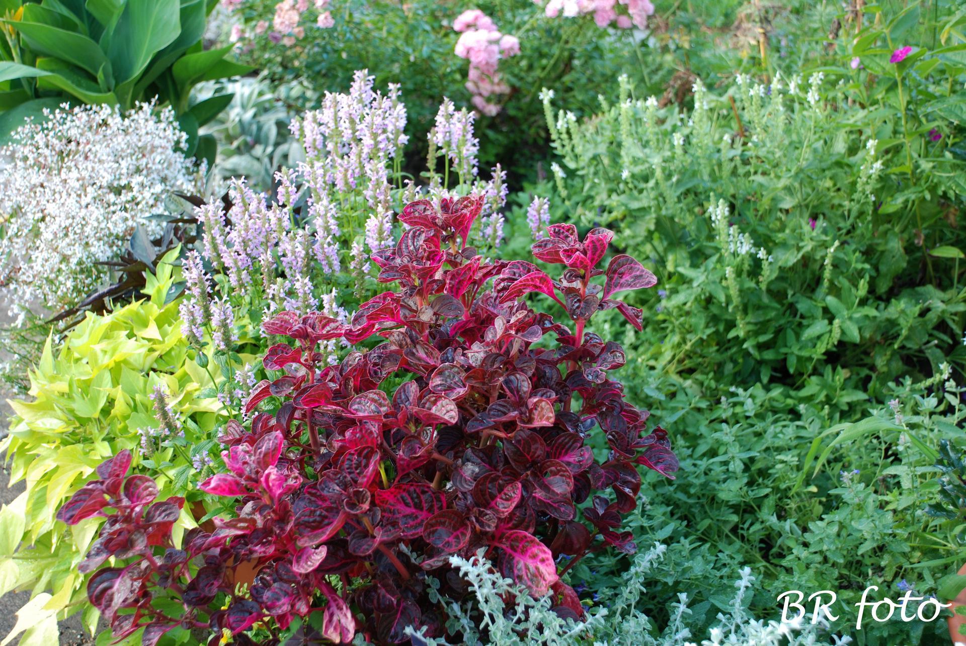Zahrada v létě - Irezína