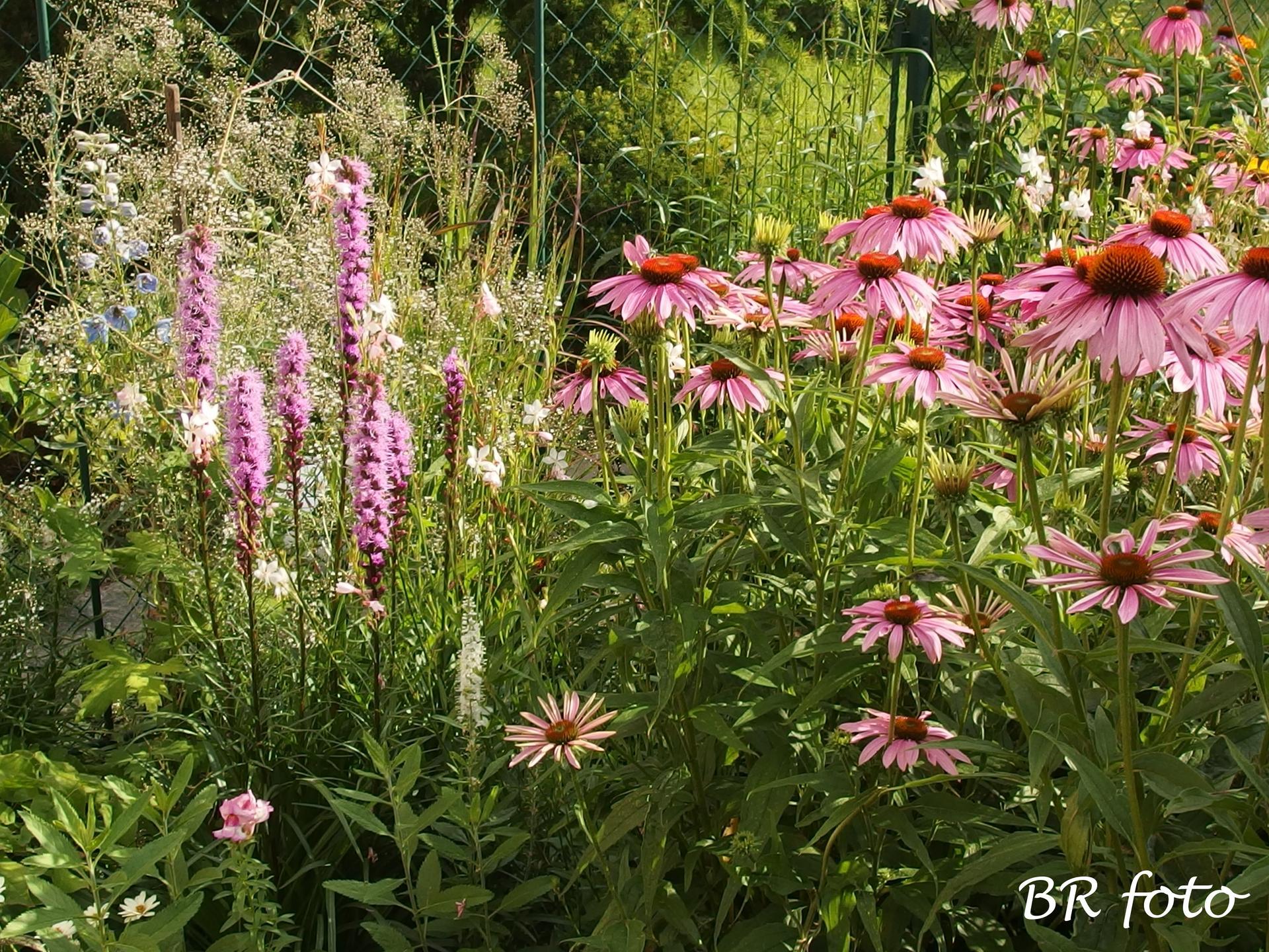 Zahrada v létě - Obrázek č. 54