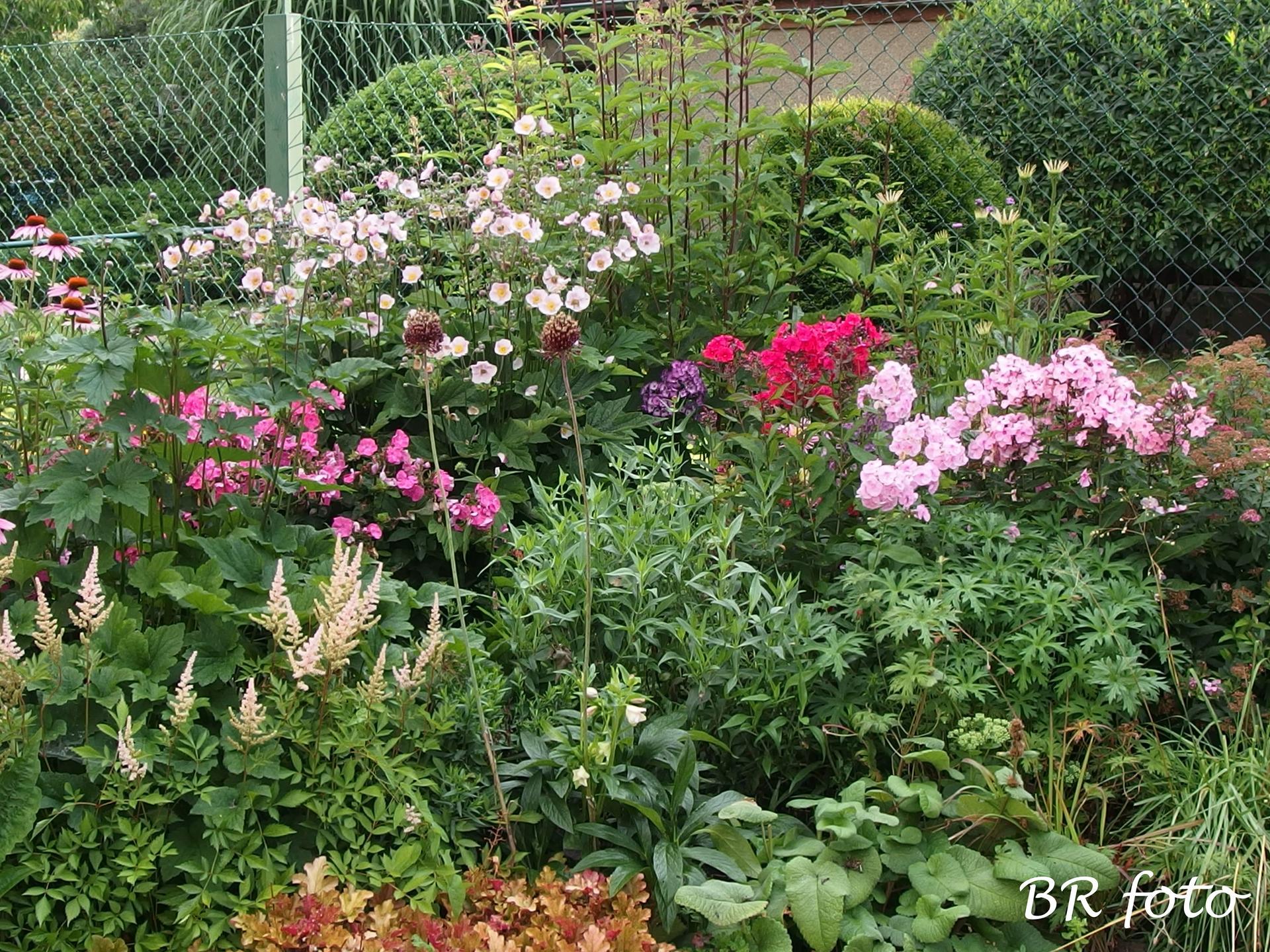 Zahrada v létě - Obrázek č. 50